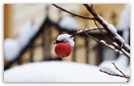 first_snow_4-t2