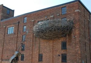 Bird's nest from The American Visionary Art Museum