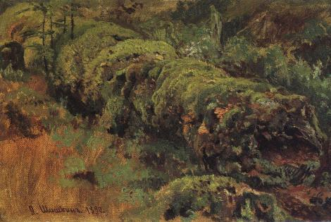 Rotten wood, covered with moss by Ivan Shishkin