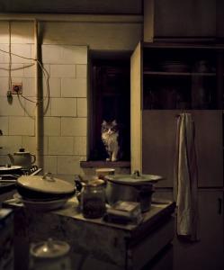 cat kitchen