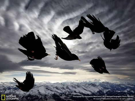 Acrobats of the air by Alessandra Meniconzi