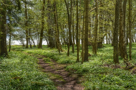 A path through woods leading to the sea. © Björn Rudberg