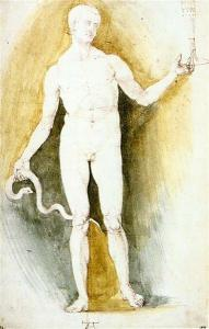 Male Nude With A Glass And Snake (Asclepius) by Albrecht Durer